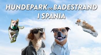 Thumbnail Hundevideo 03 - Hundepark og badestrand.00_00_00_17.Still001 16x9